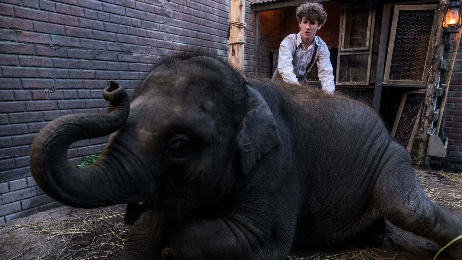 Elephants dream dublado online dating